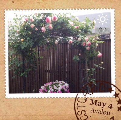 薔薇のアーチのろんちゃん